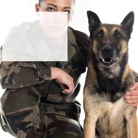 US Veteran Training