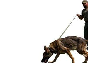 Explosives and Tracking Dog Handler