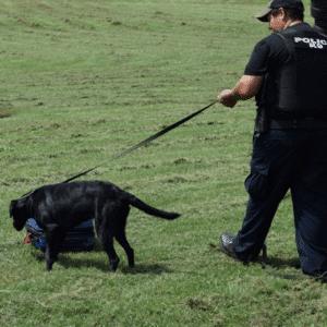 Explosives Dog Handler